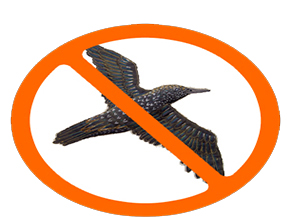 Bird Pest Control in Mumbai